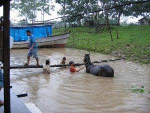 washing horse
